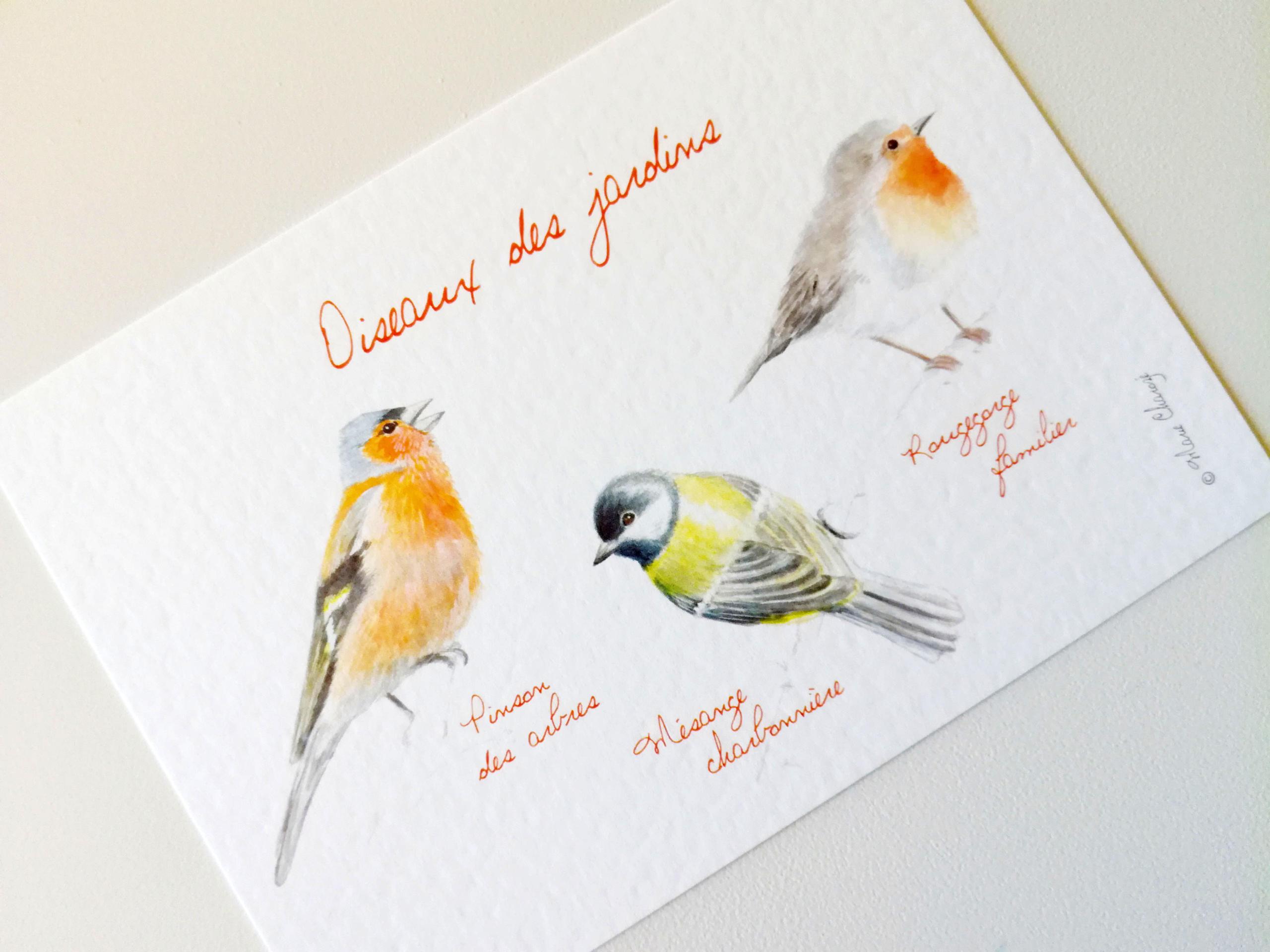 0126 Oiseaux des jardins ro