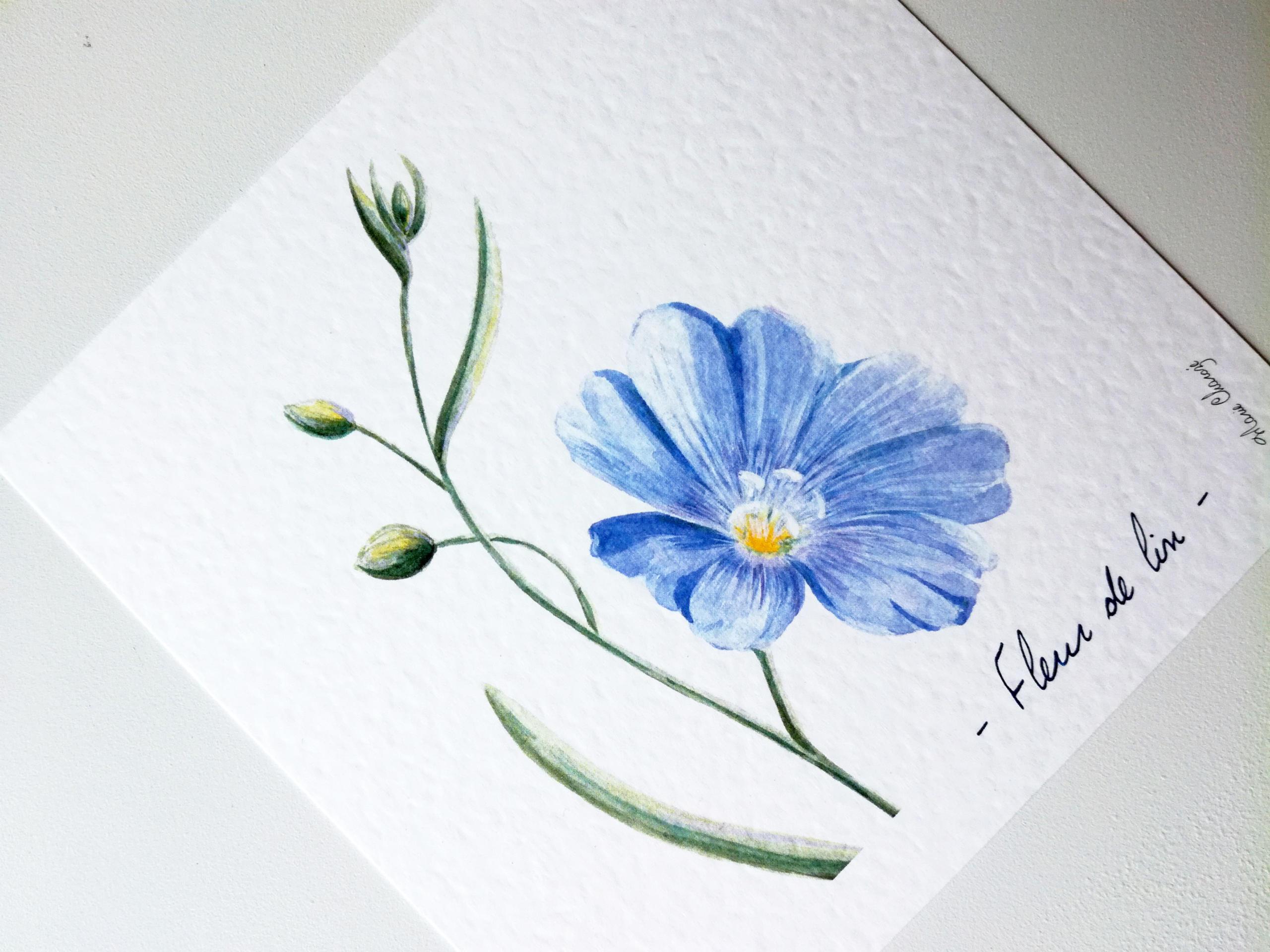 0419 Fleur de lin